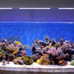 Pertimbangan Memelihara Ikan Hias Air Laut untuk Pemula