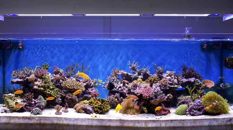 Ikan Hias Air Laut