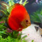 Kendala Umum yang Dihadapi Seputar Pemeliharaan Ikan Dalam Aquarium