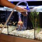 Penyebab Serta Cara Membersihkan Air Akuarium yang Keruh
