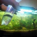 Cara Memasukkan Ikan yang Baru Dibeli ke Aquarium