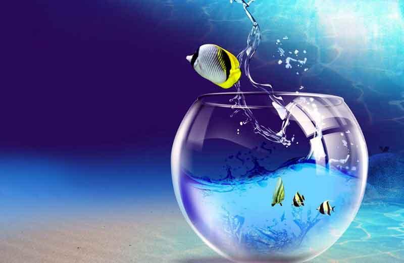 Memelihara Ikan di Fish Bowl