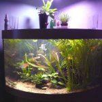 Cara Menguras Aquarium (Water Change) Tanpa Perlu Memindahkan Ikan