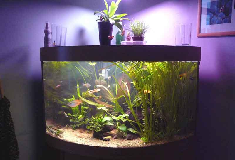 cara menguras aquarium tanpa memindahkan ikan