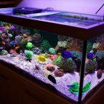 Peralatan Aquarium untuk Memelihara Ikan Hias Air Laut