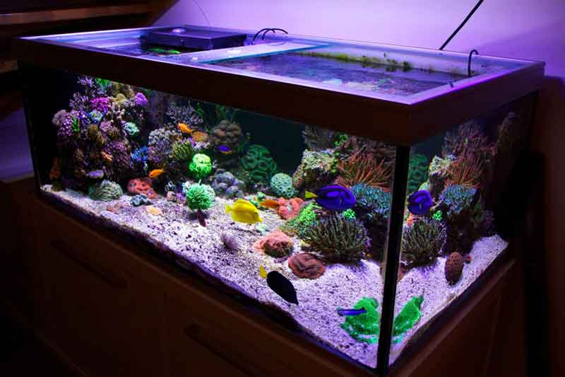 Peralatan Aquarium Air Laut