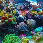 Bermacam Alat-alat Aquarium dan Fungsinya
