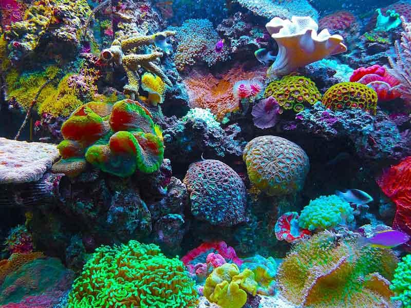 alat-alat aquarium dan fungsinya
