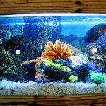 Cara Efektif untuk Membersihkan Kaca Aquarium