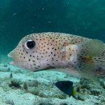 Tanya Jawab Seputar Pemeliharaan Ikan Hias