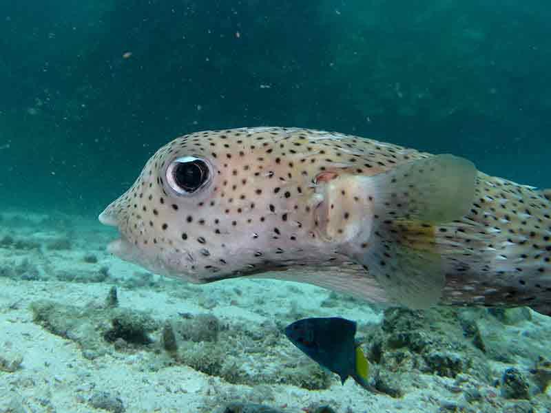 Tanya Jawab Pemeliharaan Ikan Hias