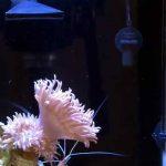 Aquarium Heater: Fungsi, Jenis dan Cara Pemasangannya