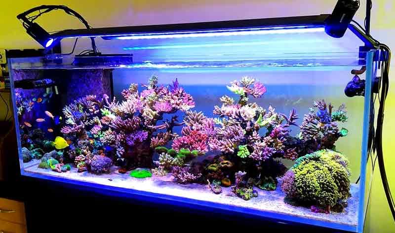 Cara memilih lampu akuarium
