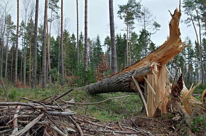 Penyebab Kerusakan Hutan