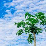 Mengenal Bagian-bagian Tumbuhan dan Fungsinya