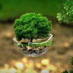 Ciri-ciri Lingkungan Sehat dan Tidak Sehat, serta Manfaatnya