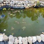 10 Cara Menghilangkan Lumut di Kolam Ikan Beton