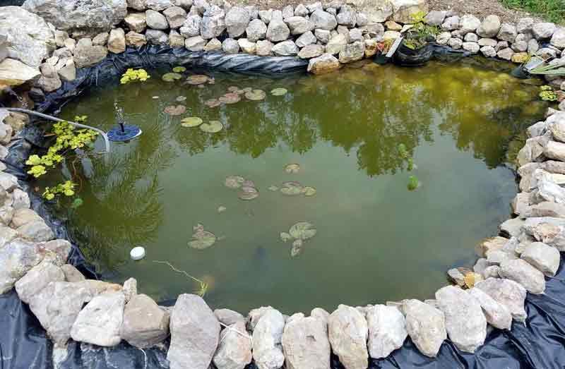 Cara Menghilangkan Lumut di Kolam Ikan Beton