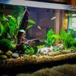 Cara Merawat Tanaman Air Aquarium